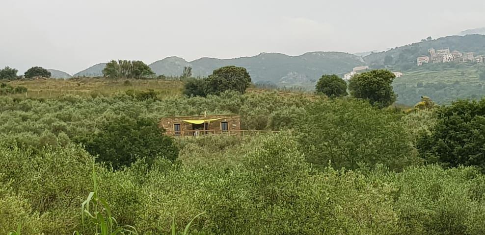 Magnifique pallier Corse au cœur d'une oliveraie