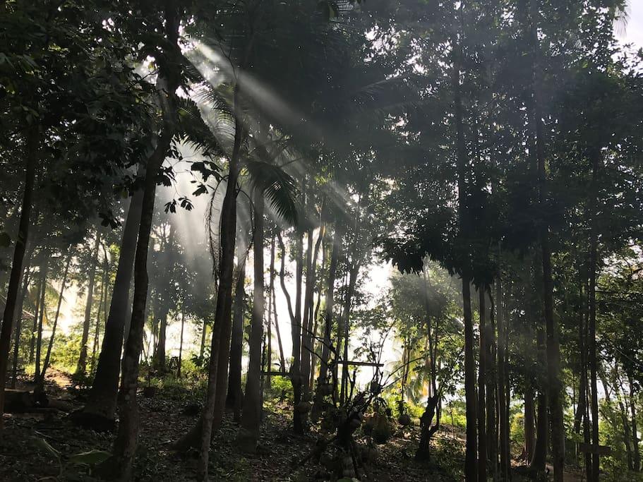 Stunning  jungle setting
