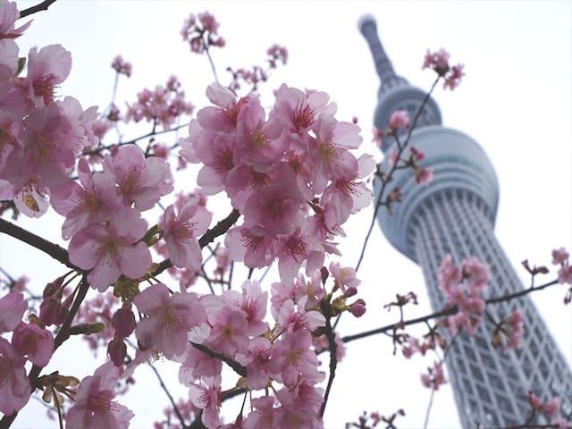 EasyAccess Asakusa/Skytree/Shibuya/Ueno・WIFI/4PAX - Sumida-ku - Daire