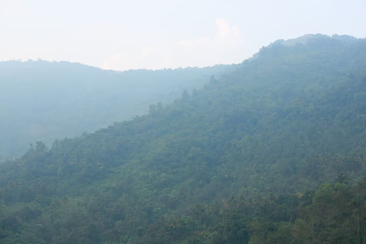 View of Paithalmala through the film of mist 2 km from the house. You can see the long view of the. Trucking through deep forest is a  chilling experience.