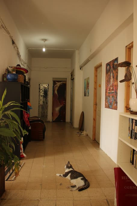 Entrance hall - we ❤ cats! (we love dogs too, but cats are more urban friendly)