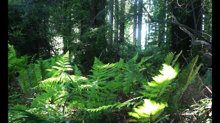 Eureka Redwood Retreat
