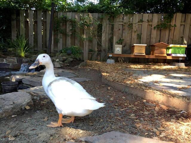 Peaceful NE Portland Urban Farm Sanctuary with AC