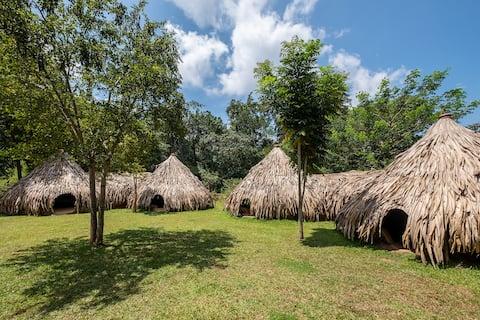 Banyan Camp