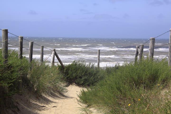 Zee, strand en duinen, Amsterdam en Haarlem