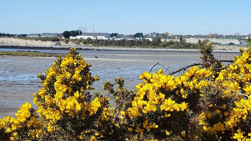 Galway - Cute apartment close to the local beach