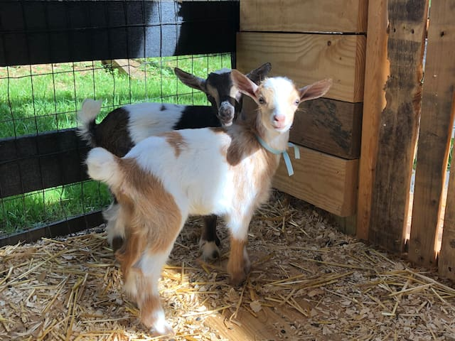 *Romantic Farmhouse Retreat*FALL*BABY GOATS*