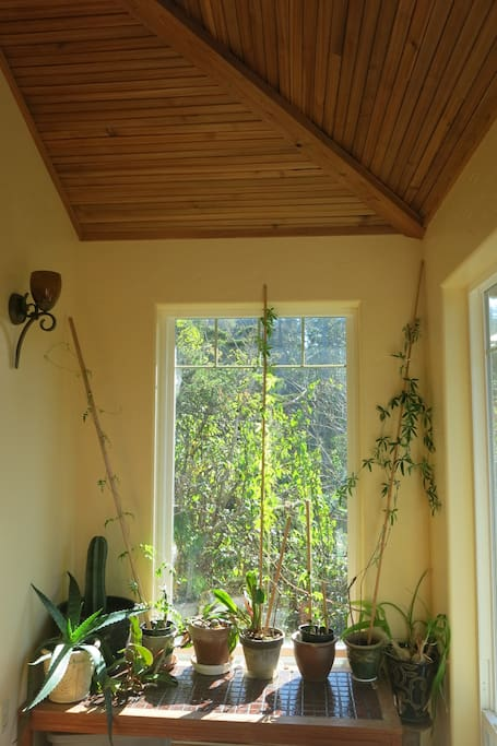 Entry room: Full of plants, windows, and arched ceilings.