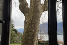 Vista del platano dalla porta del giardino