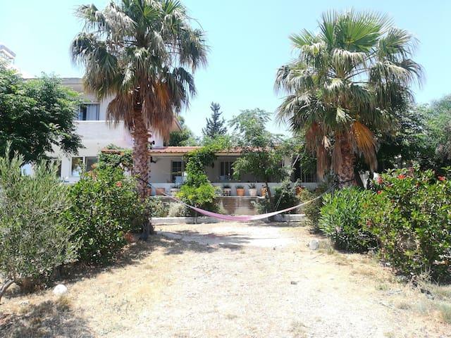 Olive Tree Farm House Sea View