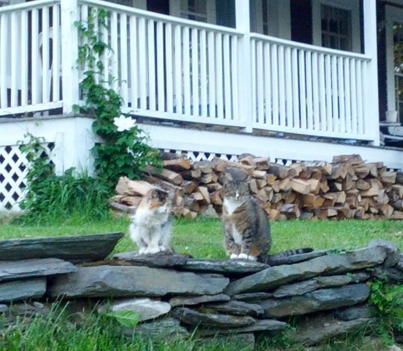 View of the front porch area from the parking spots - Note: We do not have cats