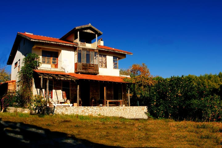 Rustic country villa in citrus and olive trees - Antalya