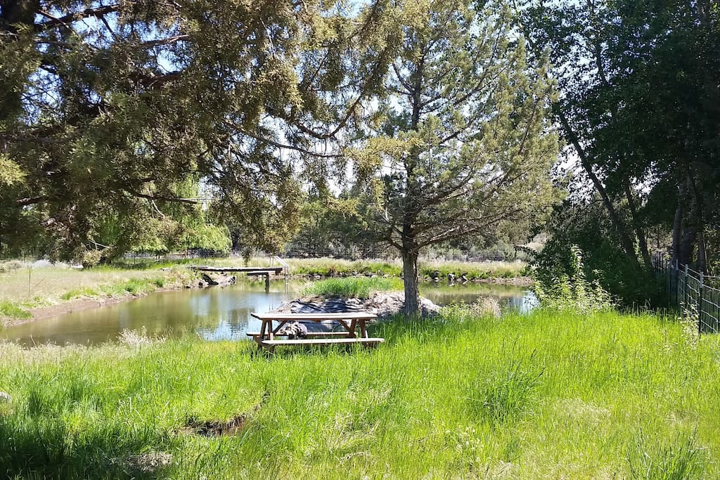 Picnic Area and Pond