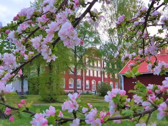 Björkåsen herrgård and hostel / vandrarhem