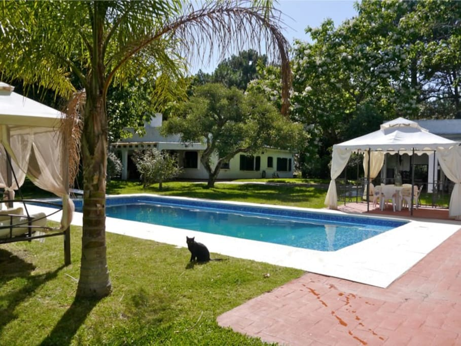 pool area and cat - now a white cat