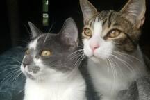 Two kittens, right is Witten left is OJ