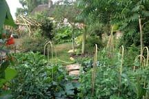 veggie and fruit plot