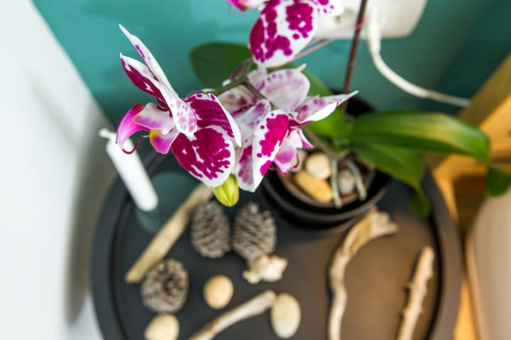 orchids in the spring