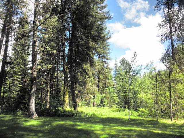 Large lot, forested setting.