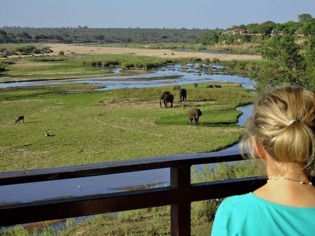 Let The Kruger's Big 5 Come To You - Crocodile River, Kruger Park