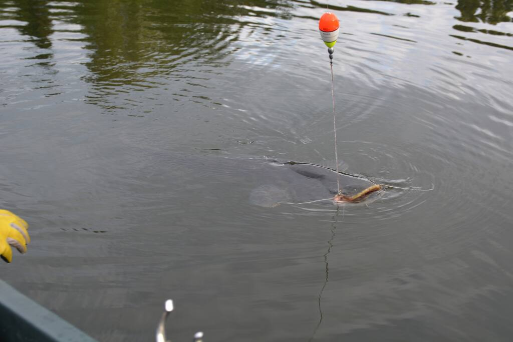 la pêche !!!