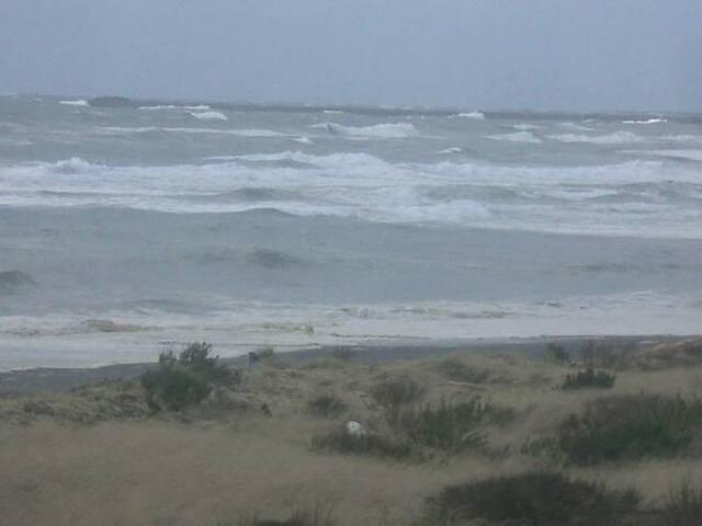 Westport Ocean,  6 + dogs on WA's Cranberry Coast!
