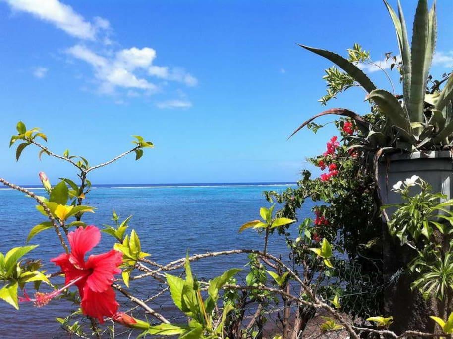 Vue à 180° sur le lagon de Paea