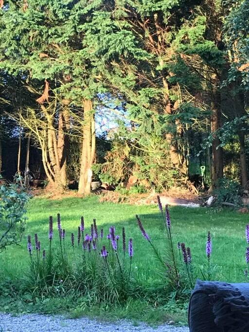 Cottage woodland garden