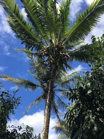Coconut Sun Hale - Pāhoa - Houten huisje