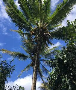 Coconut Sun Hale - Pāhoa - Mökki