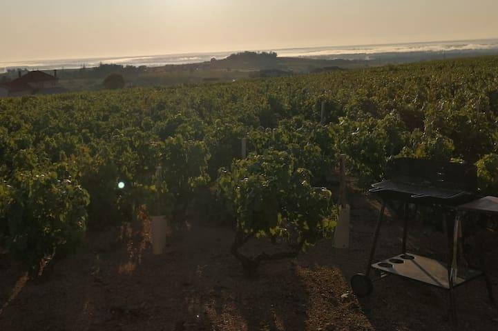 Maison au cœur des vignes avec belle vue