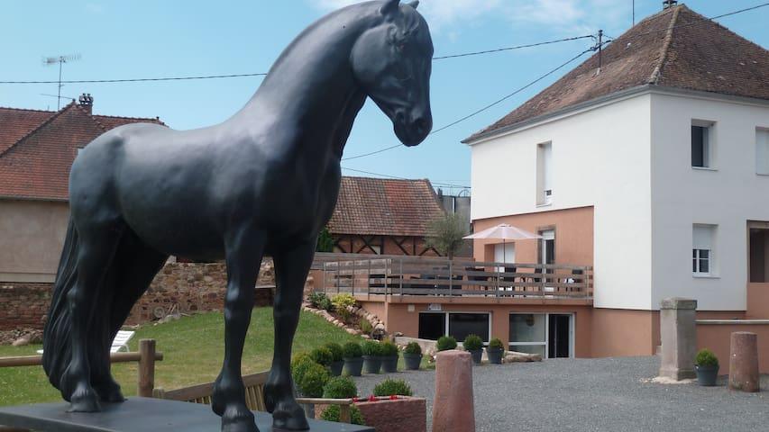 Gîte Equestre/Domaine du Haras de Saint-Pierre *** - Saint-Pierre - Apartament