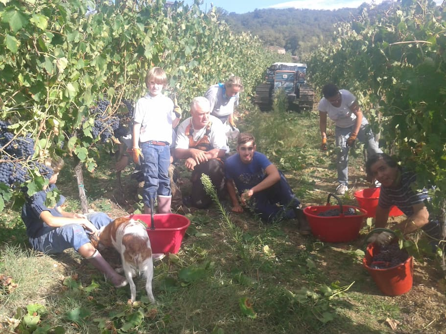 Grape Harvesting with our family !