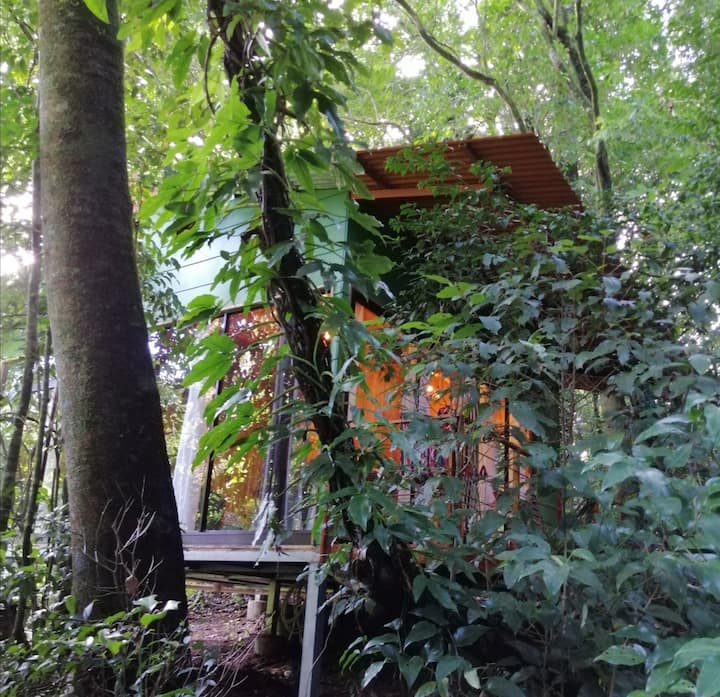 Jungle Living Tree House Aguti