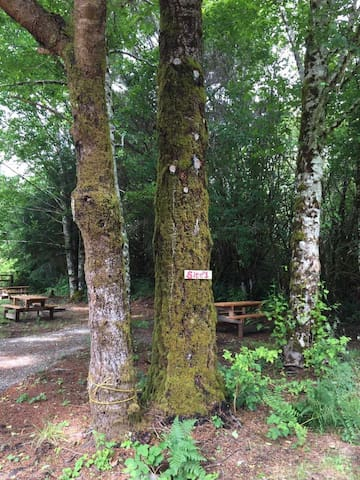 Campsites Near La Push and Forks