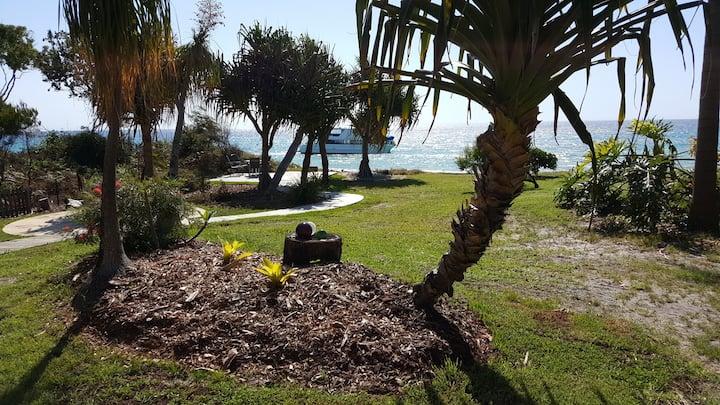 Pandanus at Cowan Cowan Moreton Island