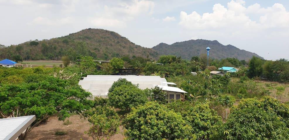 Sweet B Farm