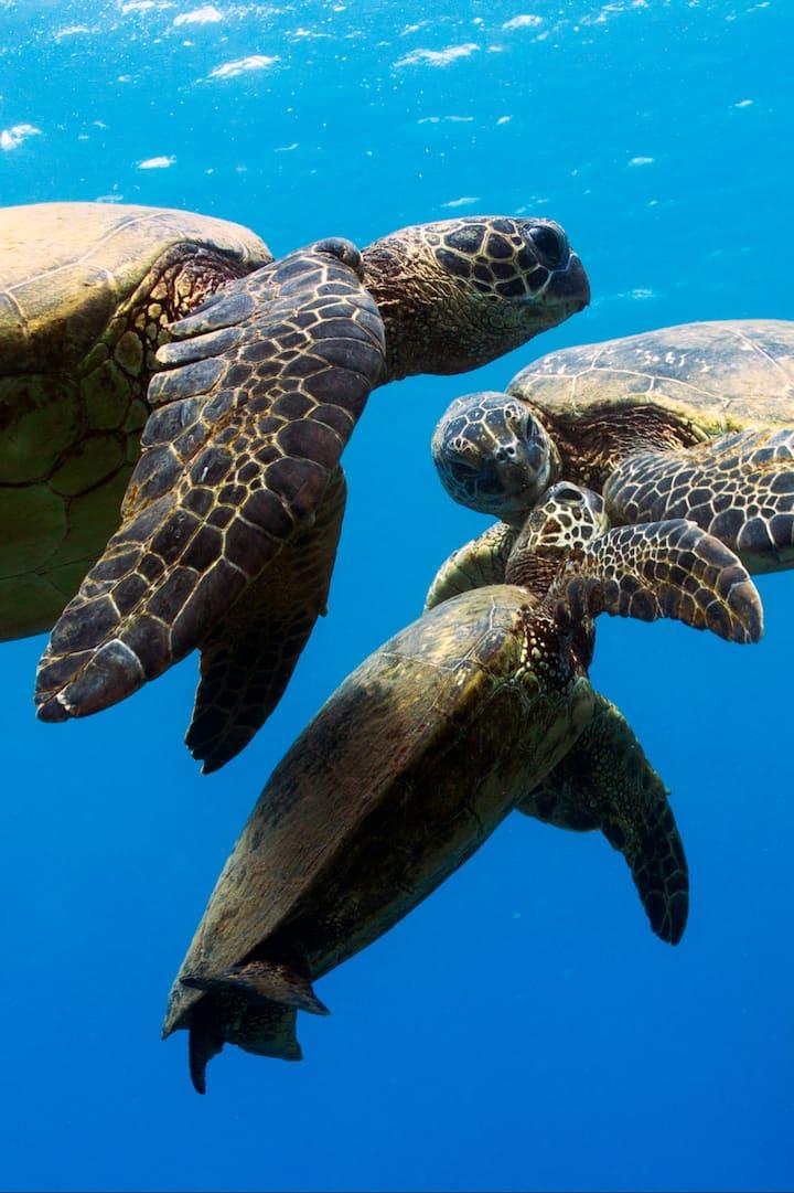 Maui love :)