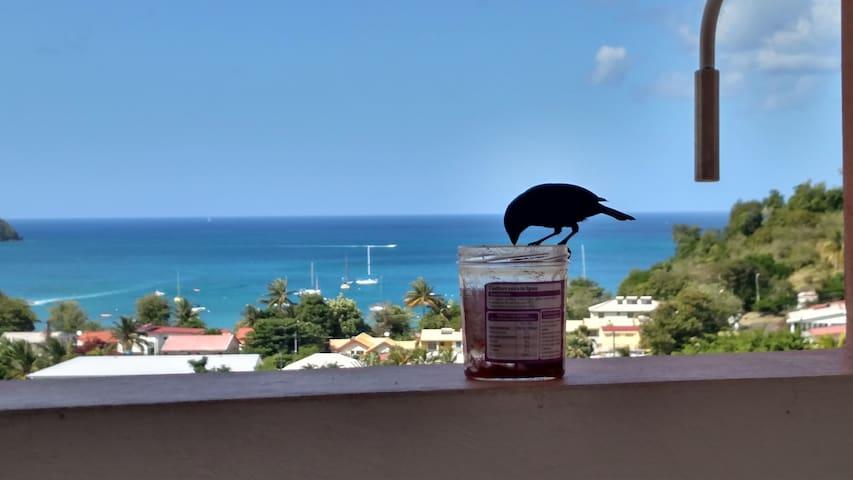 Petit déjeuner avec un habitant du coin!!!Bienvenue en Martinique