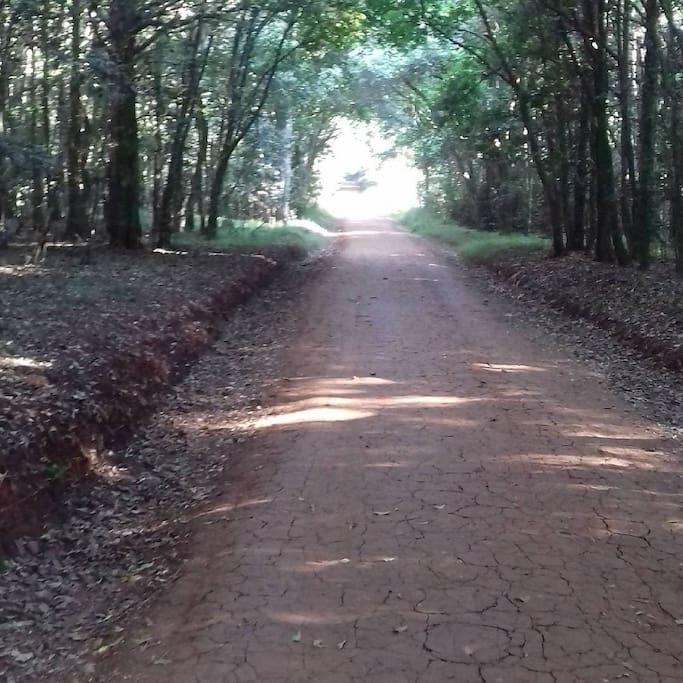 Foto von Karura Forest