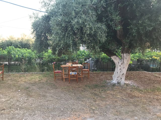 A quiet place among the olive trees!