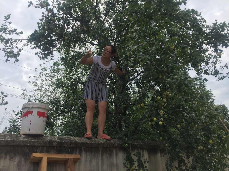 院子外的大枣树