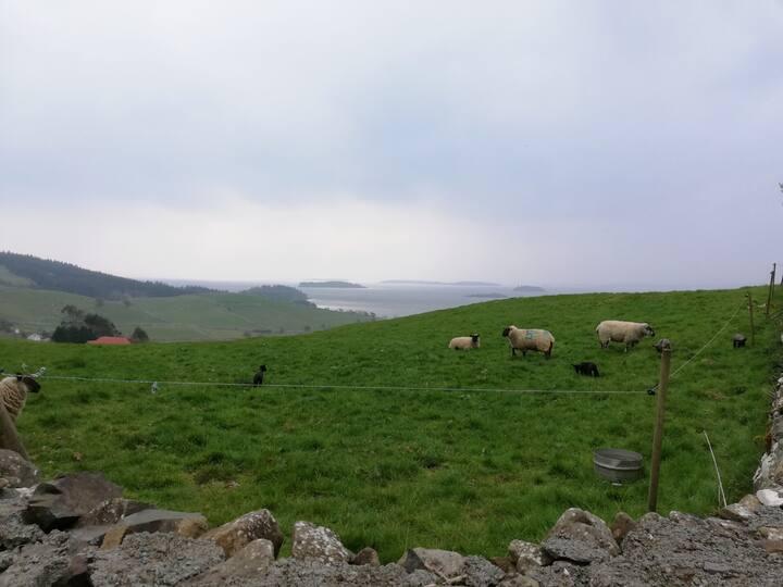 Connemara sheep on Lough Corrib