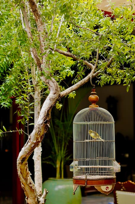 Our birds always sing so sweetly in the mornings
