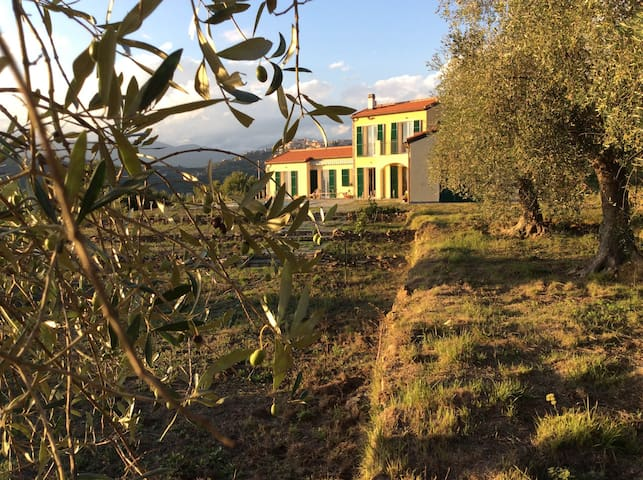 Villa surrounded by olives - Perinaldo
