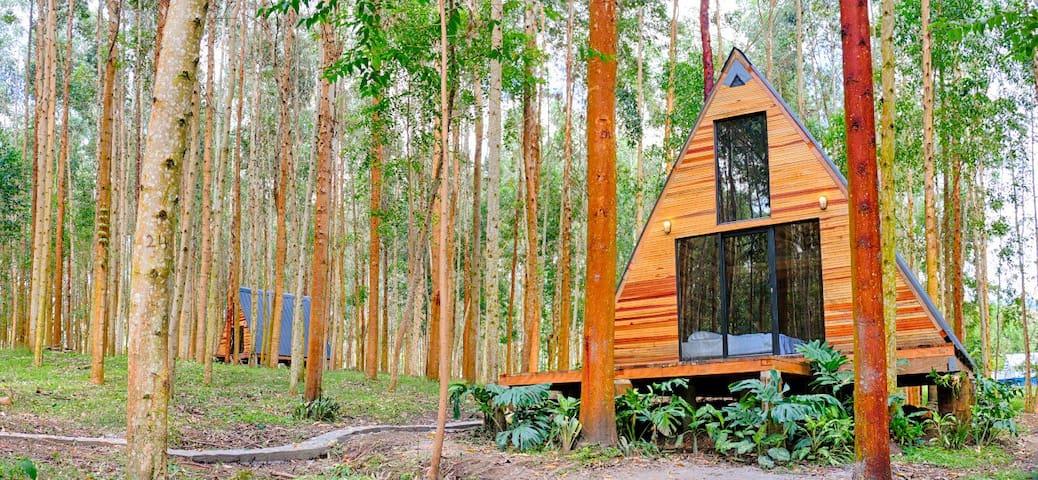 El Bosque Hostel - Pacamara