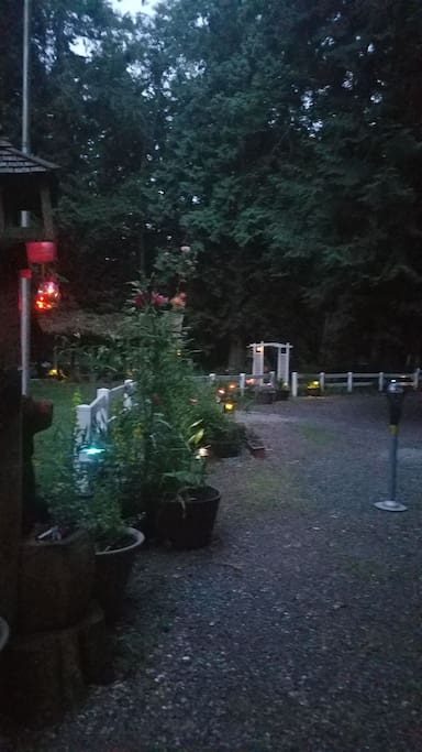 Fairy lights turn on at dusk during the summer.