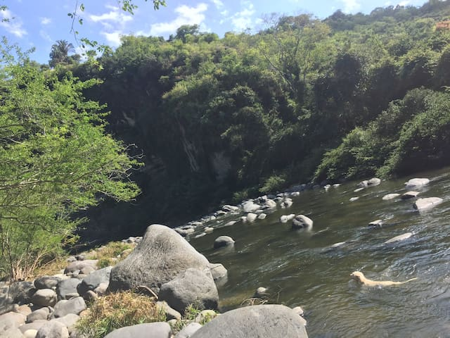 Tropical river paradise