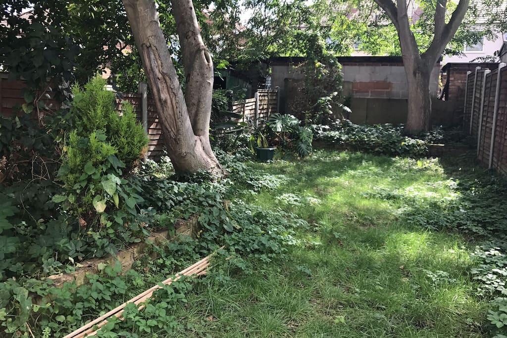 Lush Walnut and Ash Tree Garden