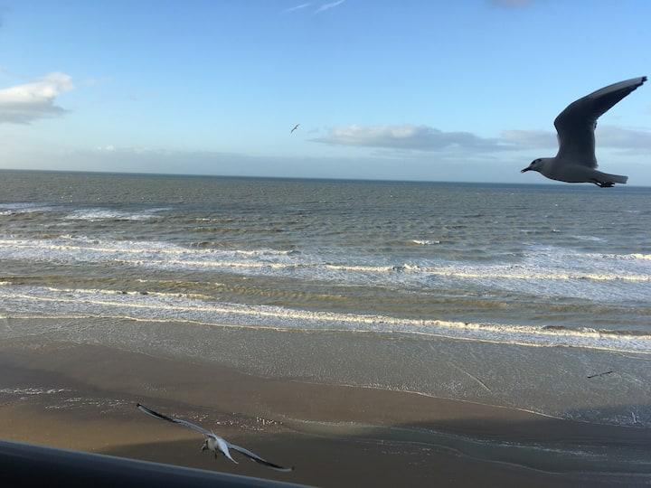 Entre dunes et mer...